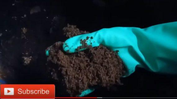 Mengelola Pupuk Kascing Untuk Tanaman Pekarangan Dari Ternak Cacing