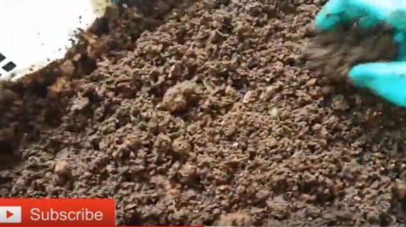 Sampah Rumah Tangga Untuk Pakan Kandang Cacing Tanah