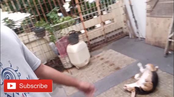 Perkembangan Budidaya Cacing Lahan Sempit Dan Tumbuhan Cabe Di Pupuk Kascing